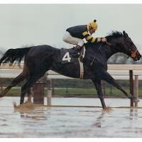 Seattle Slew 200x200