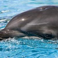 Wholphin 200x200